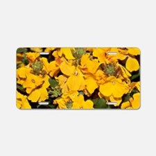 Wallflowers (Erysimum 'Suns Aluminum License Plate