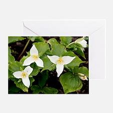 Wake robin (Trillium grandiflorum) Greeting Card