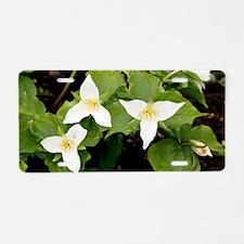 Wake robin (Trillium grandi Aluminum License Plate
