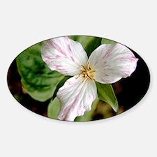 Wake robin (Trillium grandiflorum) Sticker (Oval)