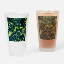 Volvox colonies, light micrograph Drinking Glass
