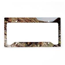 Washingtonia filifera fan pal License Plate Holder