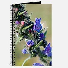 Viper's-bugloss (Echium vulgare) Journal