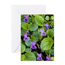 Viola odorata (Sweet Violets) Greeting Card