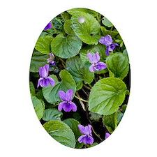 Viola odorata (Sweet Violets) Oval Ornament