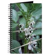 Vicia faba 'Masterpiece Green Longpod' Journal