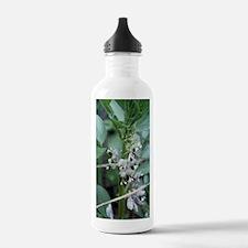Vicia faba 'Masterpiec Water Bottle