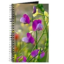 Vetchling (Lathyrus clymenum) Journal