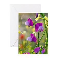 Vetchling (Lathyrus clymenum) Greeting Card