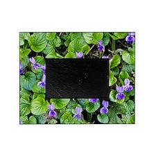 Viola odorata (Sweet Violets) Picture Frame