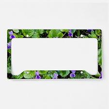 Viola odorata (Sweet Violets) License Plate Holder