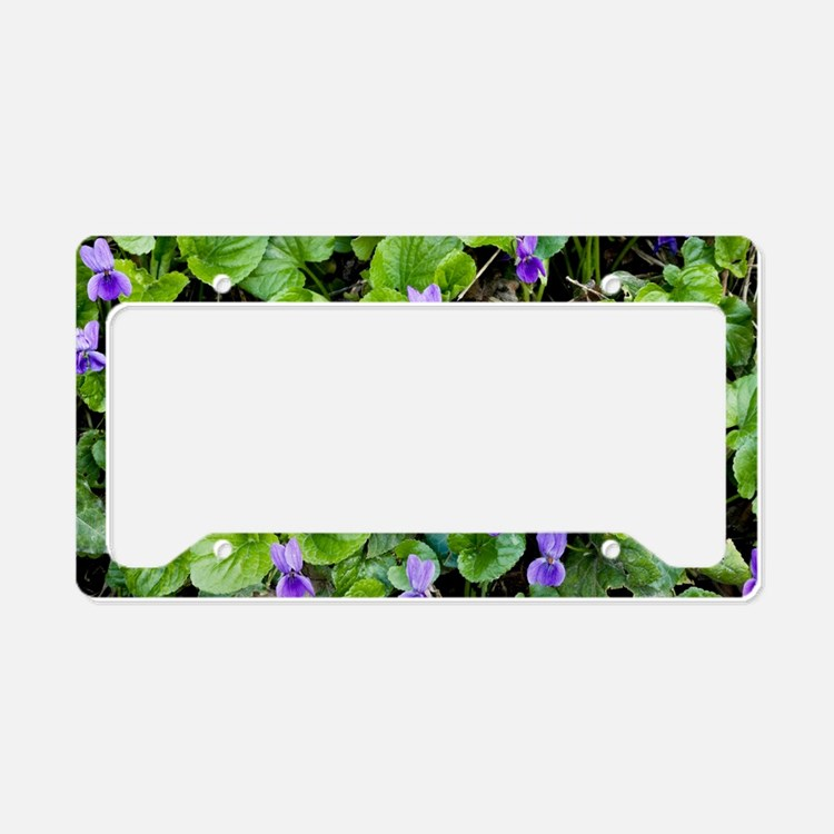 Viola odorata (Sweet Violets) License Plate Holder