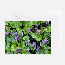 Viola odorata (Sweet Violets) Greeting Card