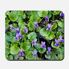 Viola odorata (Sweet Violets) Mousepad