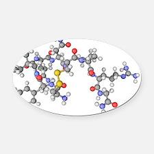 Vasopressin hormone molecule Oval Car Magnet