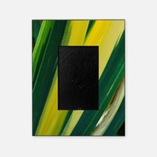Variegated sweet iris (Iris 'Variega Picture Frame