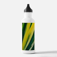 Variegated sweet iris  Water Bottle
