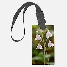 Twinflower (Linnaea borealis) Luggage Tag