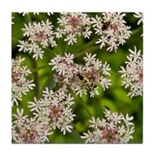 Upright hedge-parsley (Torilis japoni Tile Coaster