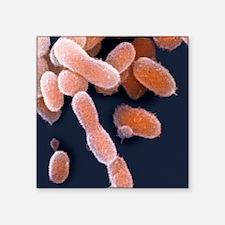 "Ultra-small extremophile ba Square Sticker 3"" x 3"""