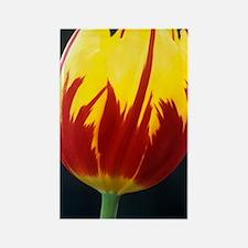 Tulipa 'Keizerskroon' flower Rectangle Magnet