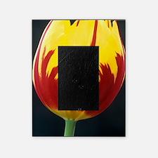 Tulipa 'Keizerskroon' flower Picture Frame