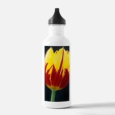 Tulipa 'Keizerskroon'  Water Bottle