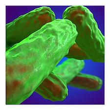 """Tuberculosis bacteria Square Car Magnet 3"""" x 3"""""""