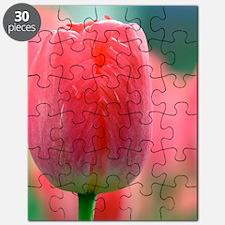 Tulip (Tulipa 'Judith Leyster') Puzzle