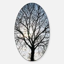 Tree in silhouette Sticker (Oval)
