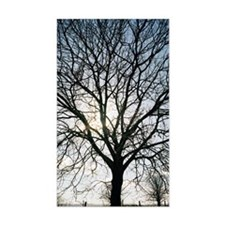 Tree in silhouette Decal