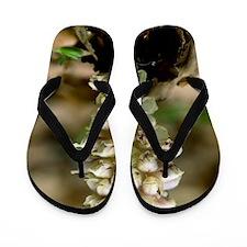 Toothwort (Lathraea squamaria) Flip Flops