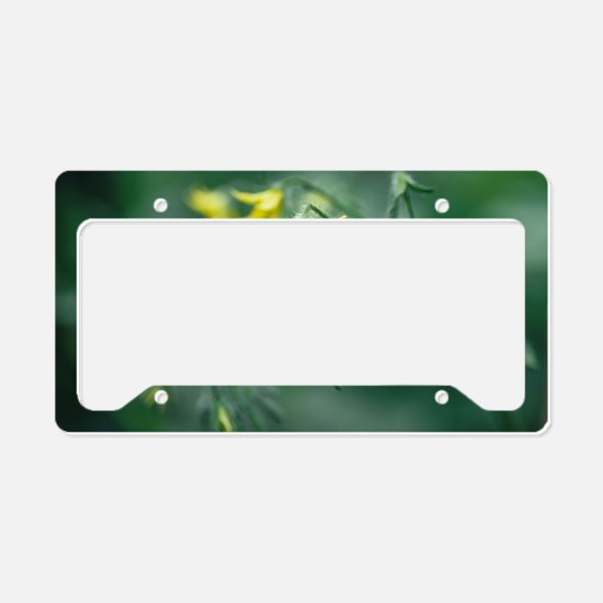 Tomato plant flowers License Plate Holder