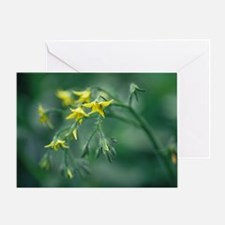 Tomato plant flowers Greeting Card