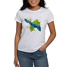 Transcription factor-DNA, molecula Tee