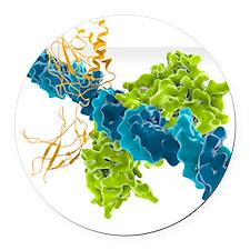 Transcription factor-DNA, molecul Round Car Magnet