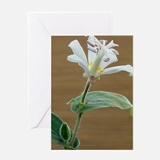 Toad lily flower Greeting Card