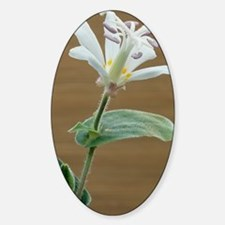 Toad lily flower Decal