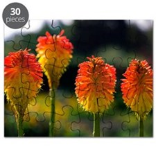 Torch Lily (Kniphofia rooperi) Puzzle