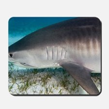 Tiger shark Mousepad