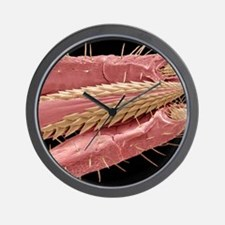 Tick mouthparts, SEM Wall Clock