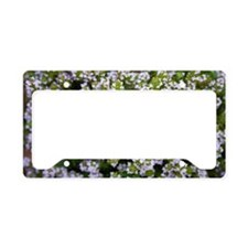 Thyme (Thymus sp.) License Plate Holder