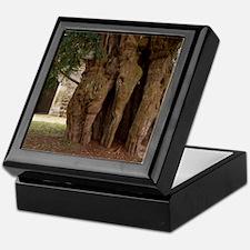 The Lytchet Matravers Yew (Taxus bacc Keepsake Box