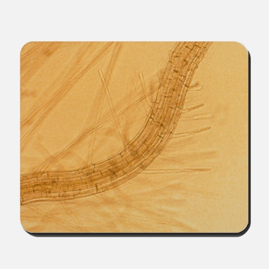 Thale cress root with root hairs Mousepad