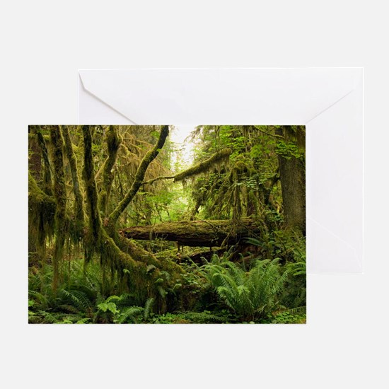 Temperate rainforest Greeting Card