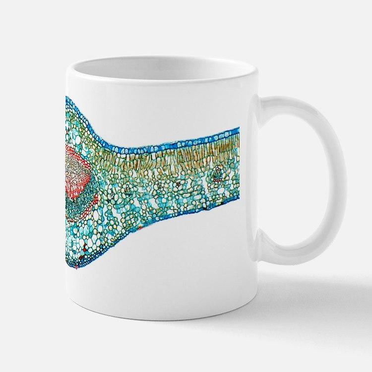Tea leaf, light micrograph Mug
