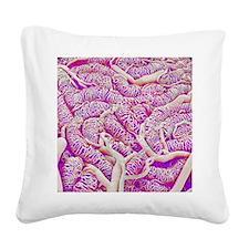 Testis blood vessels, SEM Square Canvas Pillow