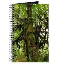 Temperate rainforest Journal