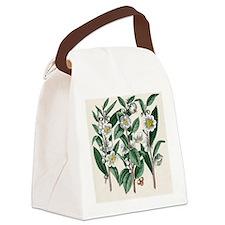 Tea plant Canvas Lunch Bag