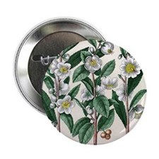 "Tea plant 2.25"" Button"